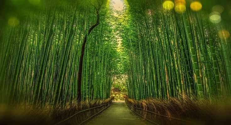 ป่าไผ่ซากาโนะ