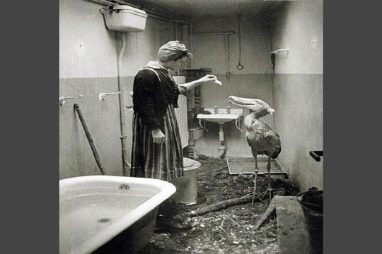 ที่พักพิงสำหรับสัตว์ ปี 1945