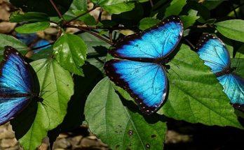 สัตว์สีน้ำเงินที่หายาก