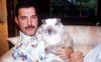 เพื่อนแมวเหมียวของ Freddie Mercury ปี 1988