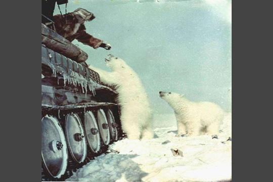 เลี้ยงหมีขั้วโลก ปี 1950