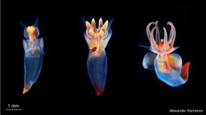 สัตว์ใต้ทะเลลึก